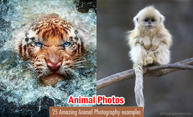 Animal Photography