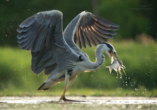 bird photography by mirek