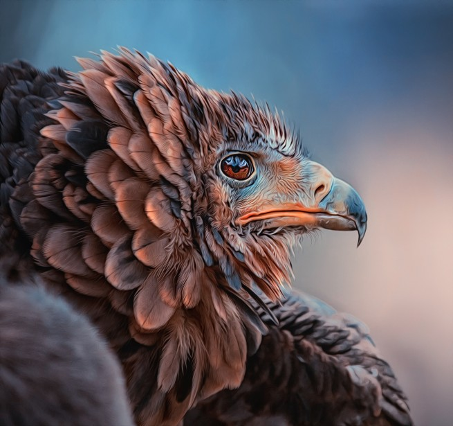 eagle bird photography by detlef