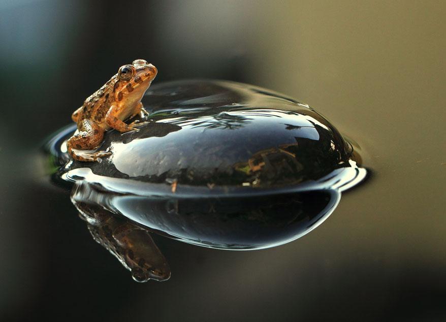 frog macro photography by shikhei