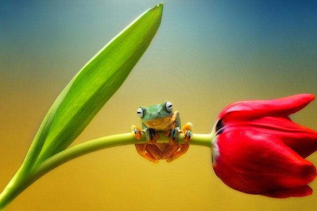 frog photography by ellena