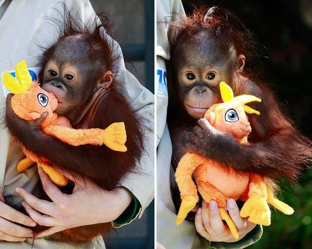 funny animals monkey