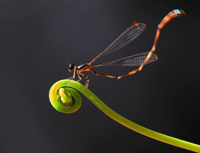 macro photography by shikhei goh