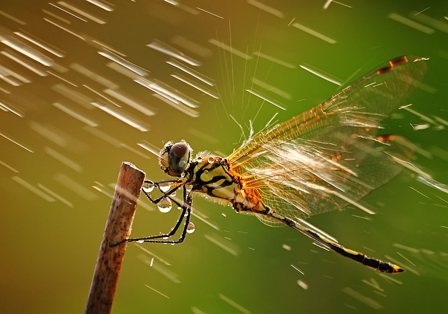 macro photography by shikhei