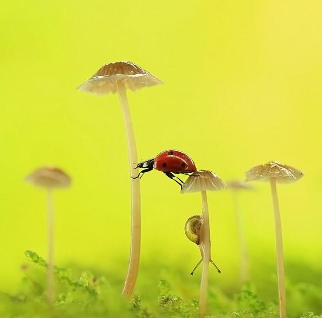 mushroom macro photography by liang