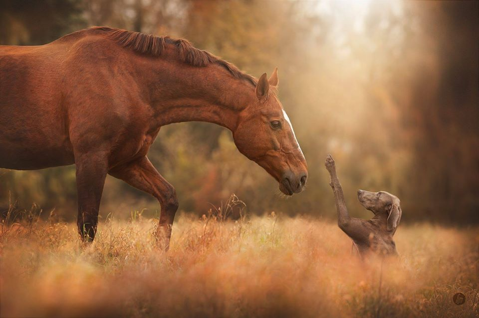 animal photography horse