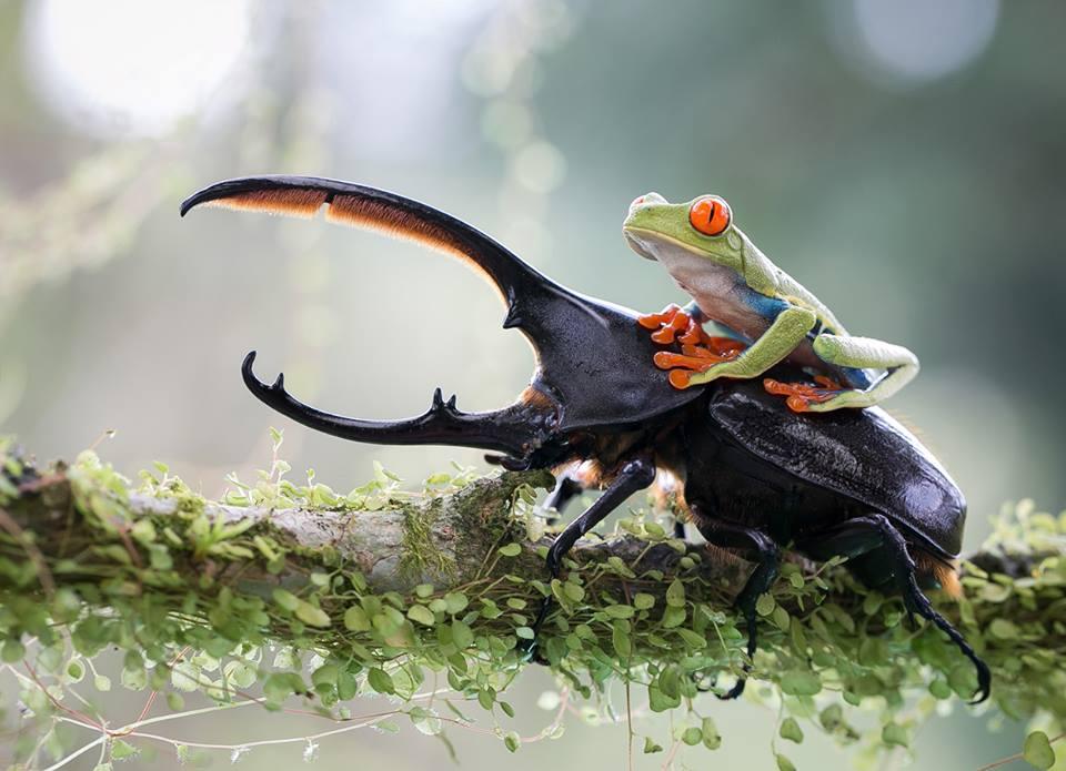 wildlife photography frog