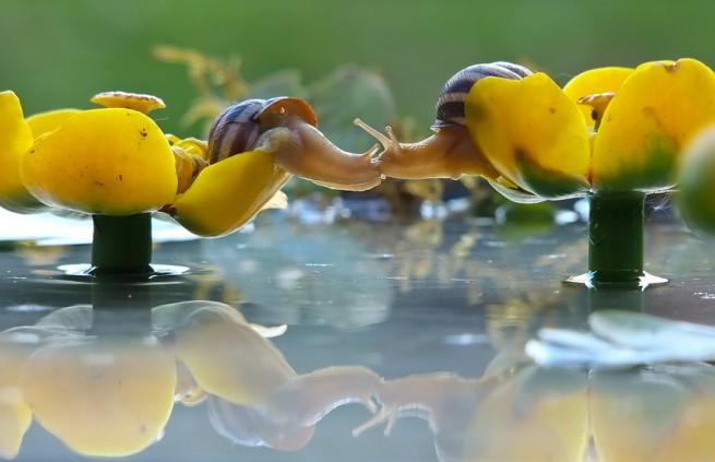 wildlife photography snail