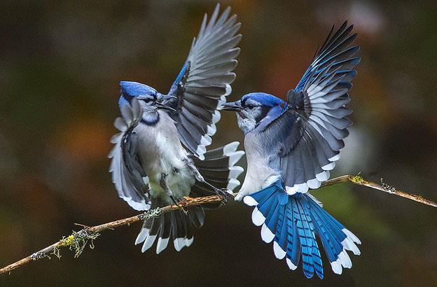 14 bird photography earl reinink