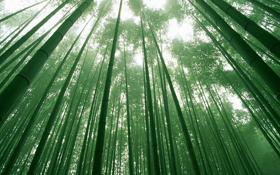 16 bamboo forest photography