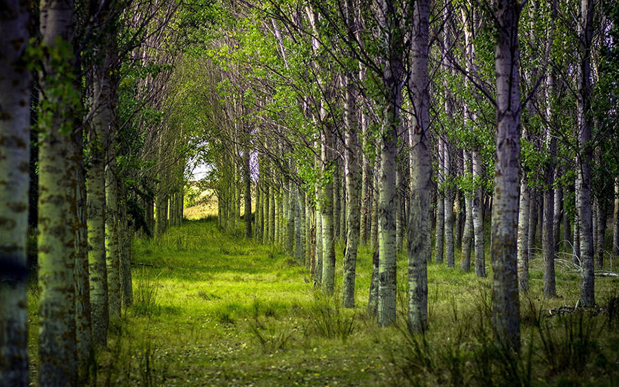 17 forest photography