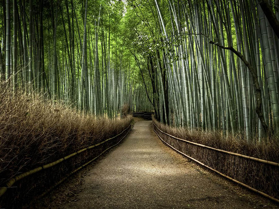 2 bamboo forest photography