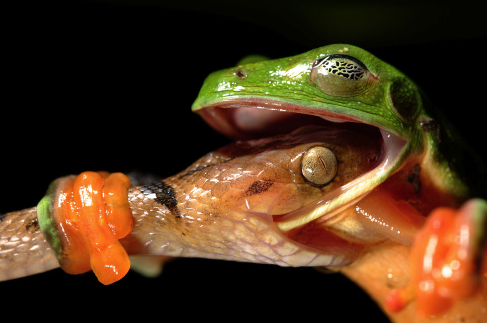 frog photography inspiration -  2