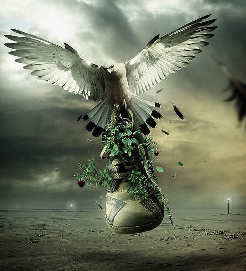 bird photo manipulation -  21