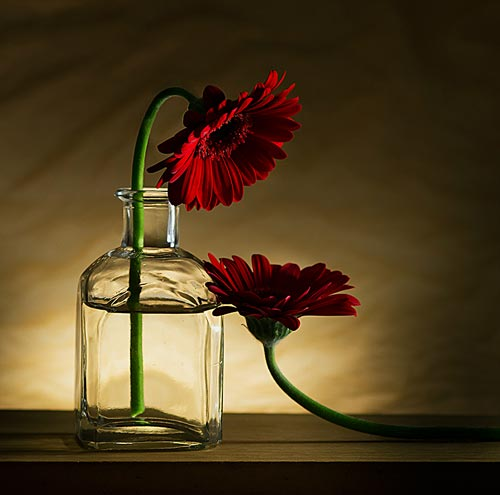 daliah still life photography -  23