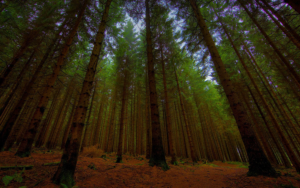deep forest photography