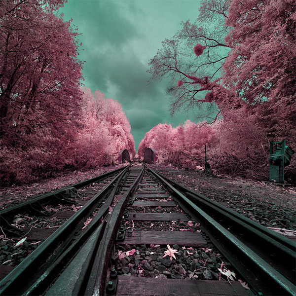 infrared photography -  6