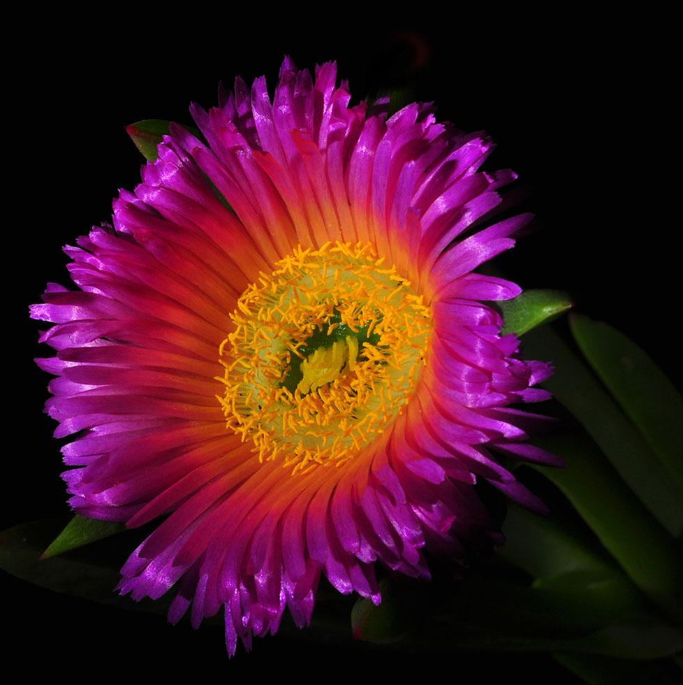 flower photography bill gracey