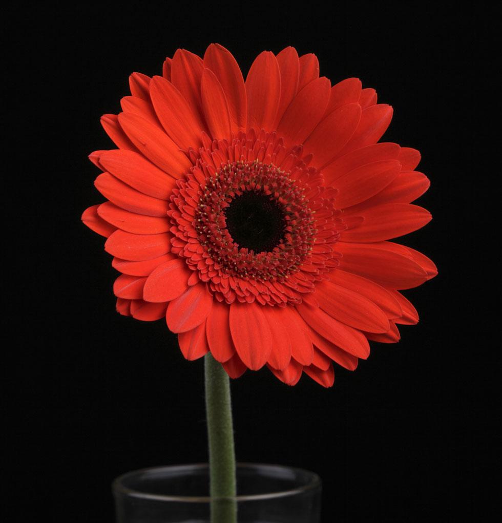 flower photography sinu kumar
