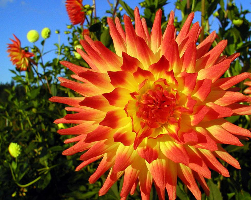 flower photography steve skupa