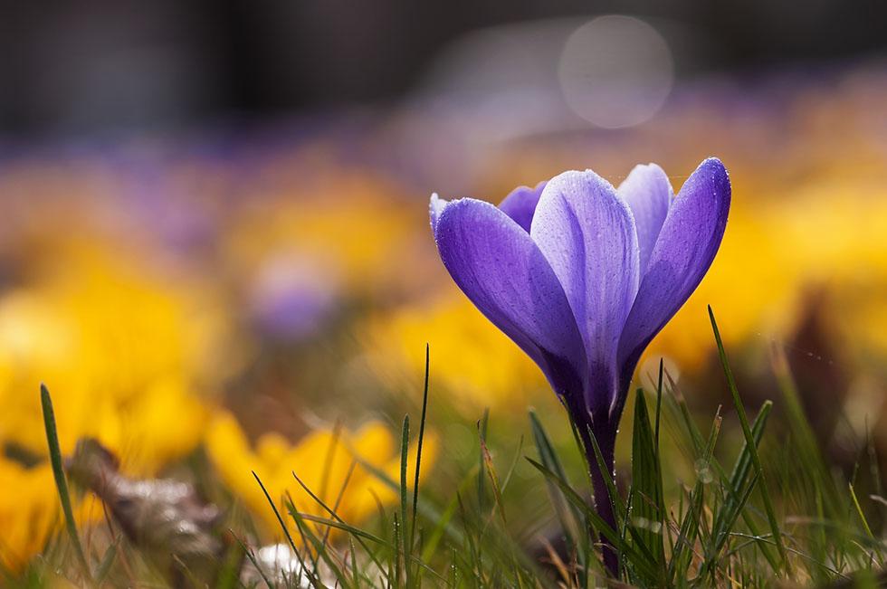 flower photography uta naumann