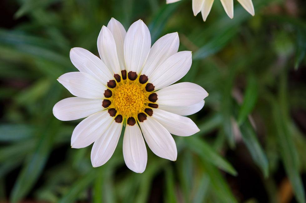 flower photography yannis