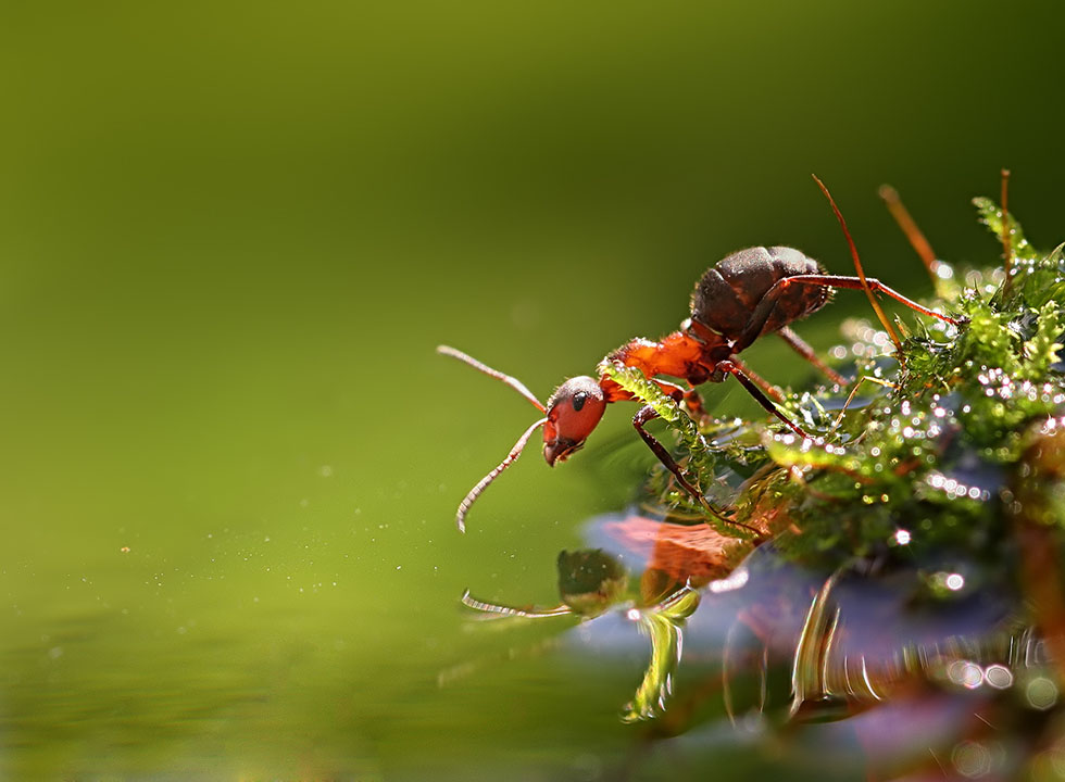 macro photography vadim trunov