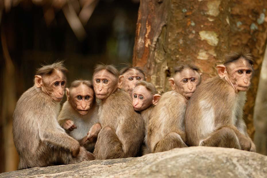 monkeys animal photography