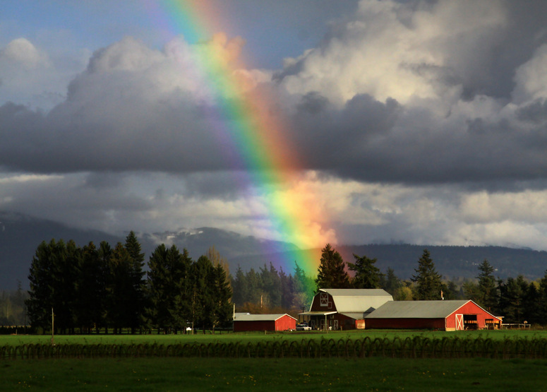 rainbow photography dairy form