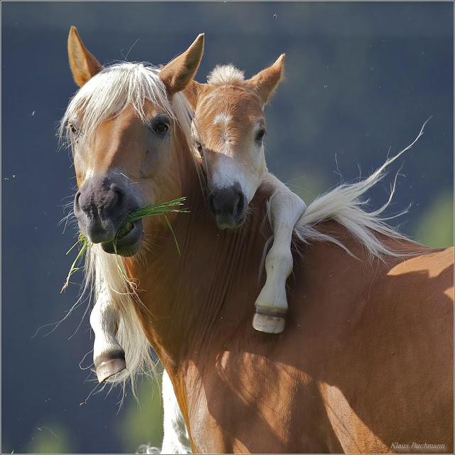 wildlife photography horse