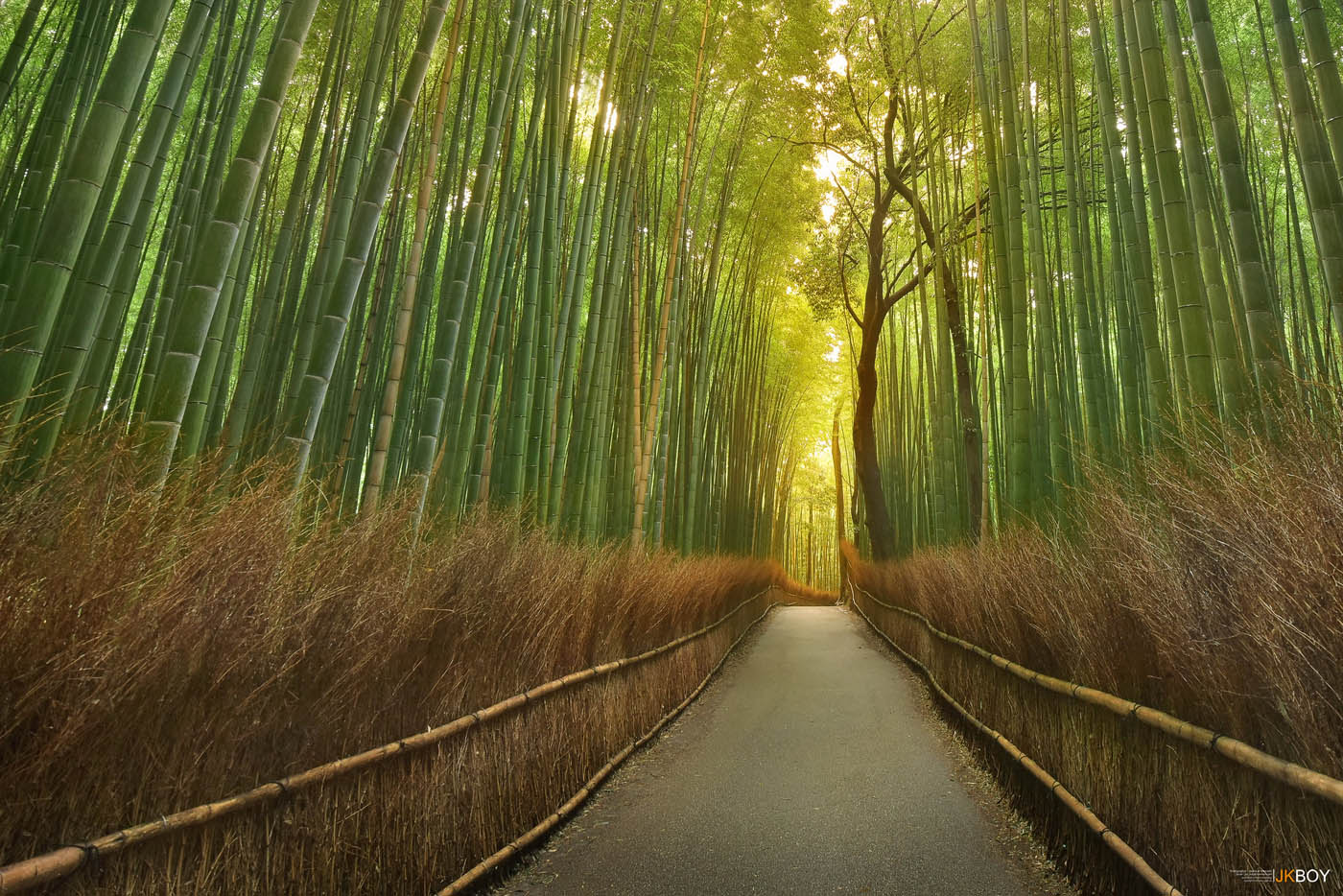 11 travel photography bamboo forest by jkboy jatenipat