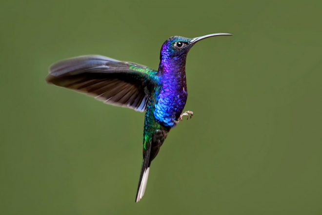 bird photography humming bird chris morgan