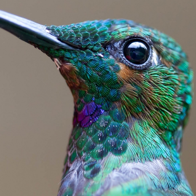 bird photography huming bird chris morgan