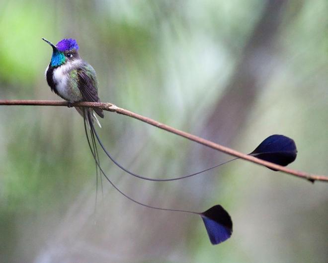 bird photogrpahy chris morgan