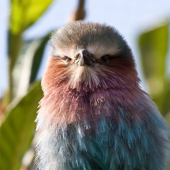 bird photography chris morgan