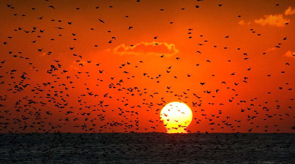 bird photography 11
