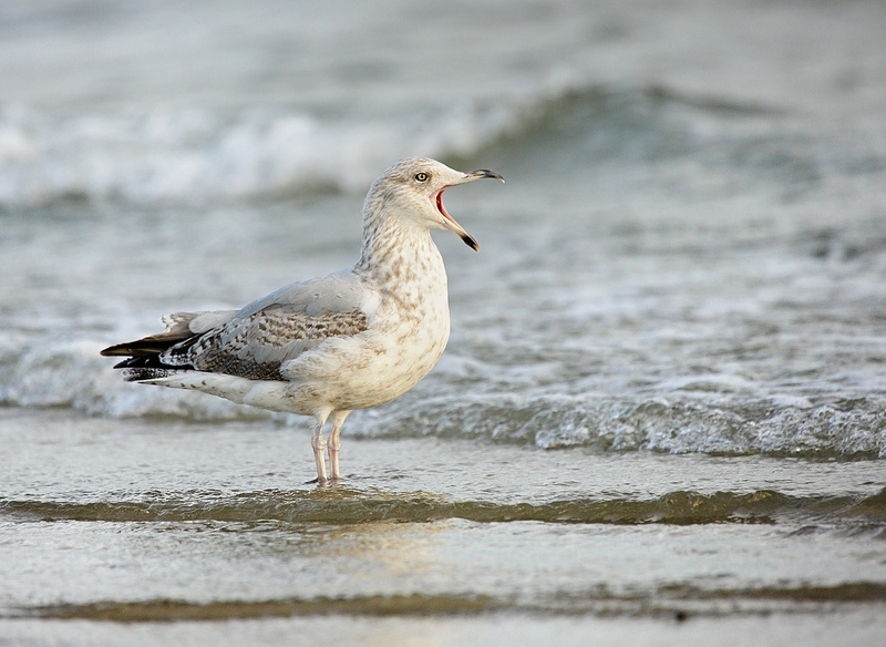 bird photography 12