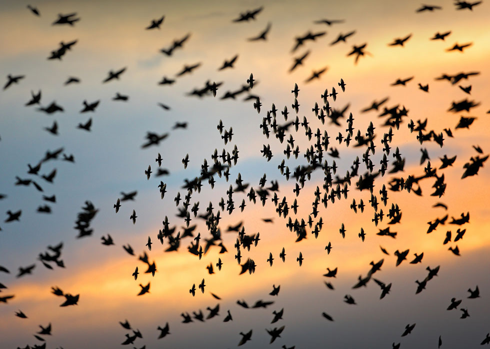 bird photography 13