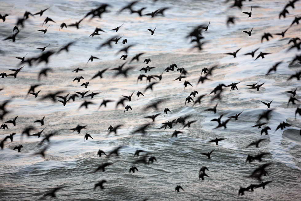 bird photography 14