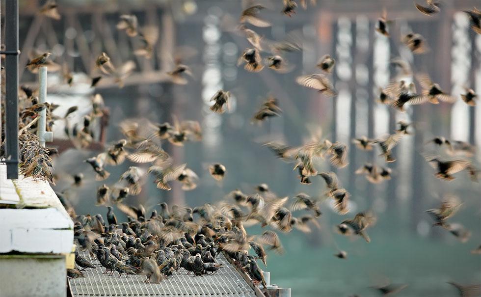 bird photography 15