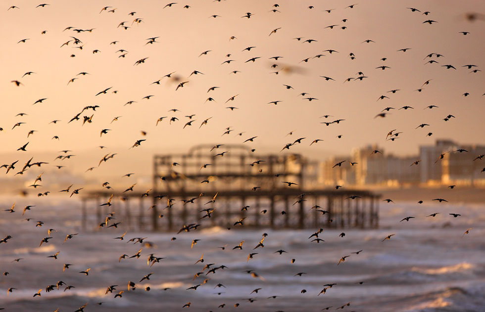 bird photography 17