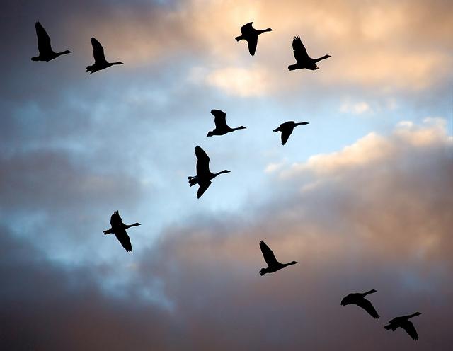 bird photography 6