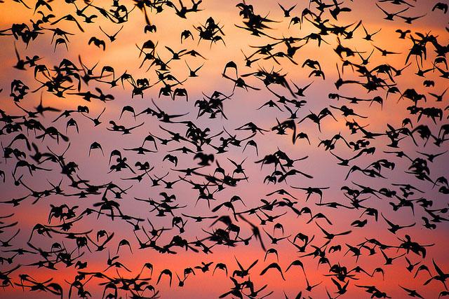 bird photography 7