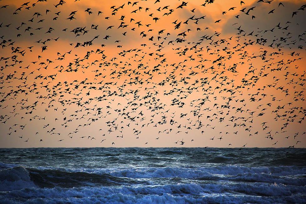 bird photography 8