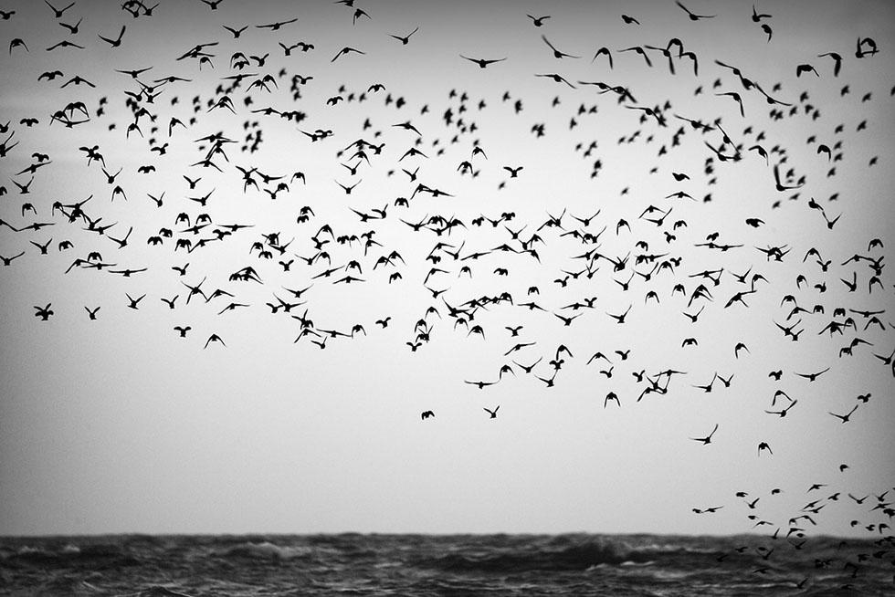 bird photography 9