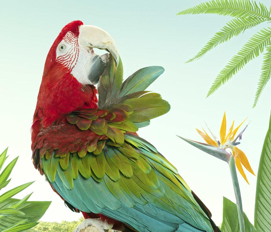 bird-photography-zack-seckler-1