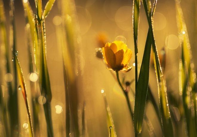 macro photography joni niemela 11