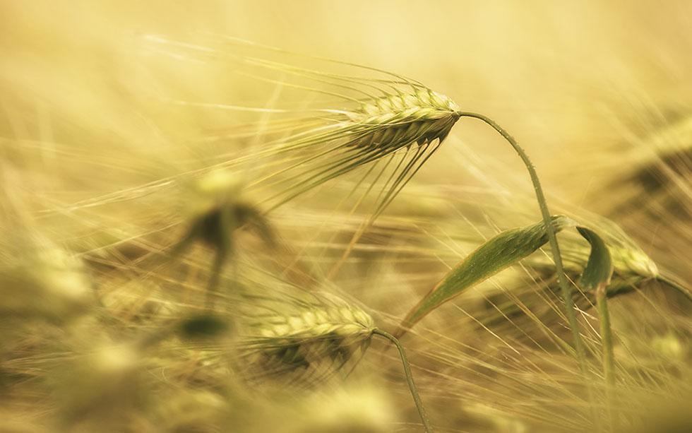 macro photography joni niemela 14
