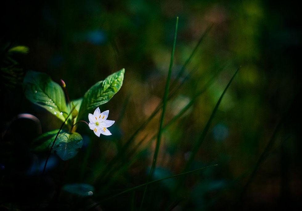 macro photography joni niemela 2