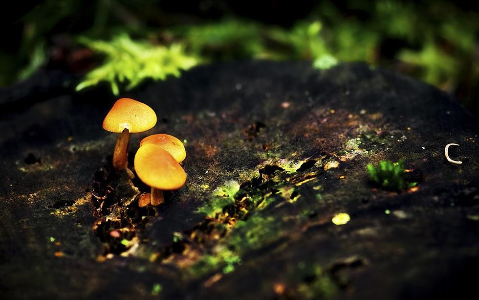 macro photography joni niemela 7